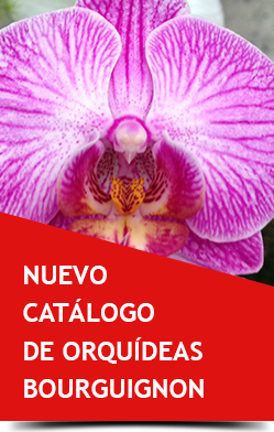 catalogo orquideas