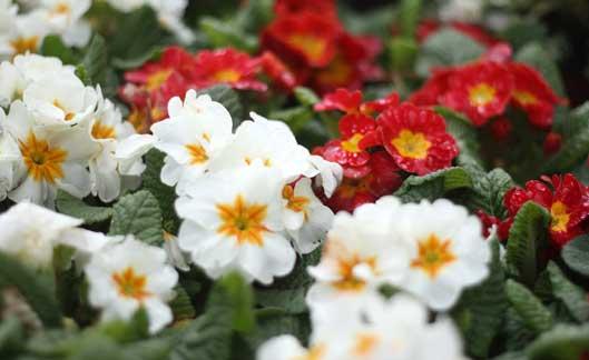 Consejos plantas temporada for Plantas temporada