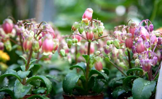 gal_planta-de-flor_01