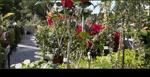novedades garden center bourguignon