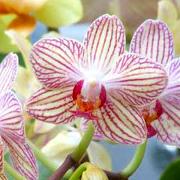 Nos especializamos en todo tipo de orquídeas.