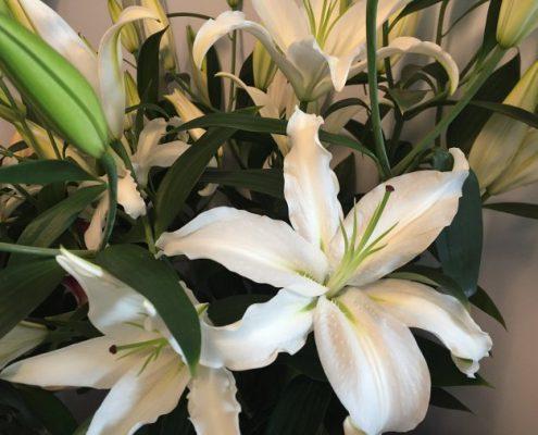 ramo-lillium-blancos