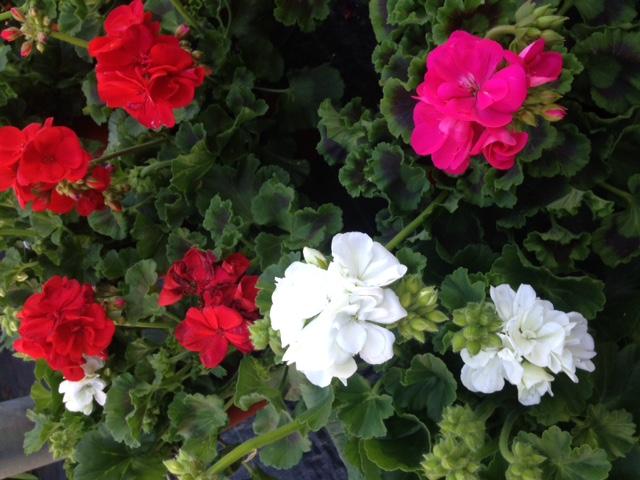 Trucos de jardiner a de marzo for Trucos jardineria