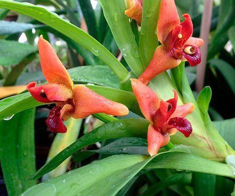 curso de orquídeas