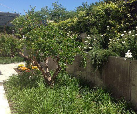Paisajismo for Jardin 00 garden