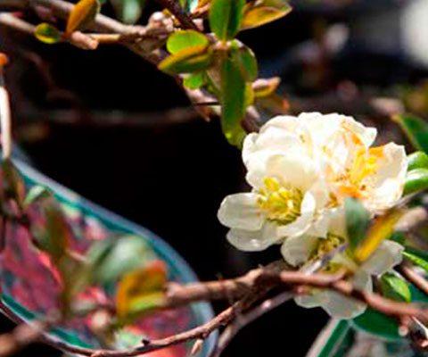 taller podas arboles arbustos