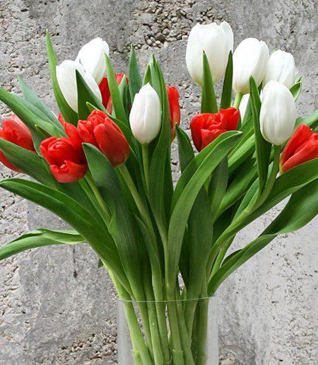 ramo de tulipanes