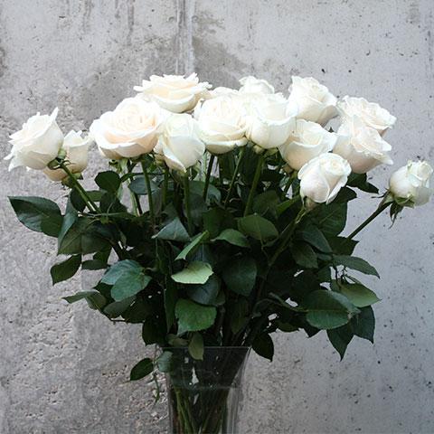 Ramo de rosas blancas - Garden Center Bourguignon