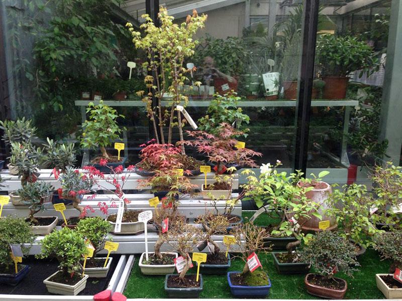 Curso de creación y cultivo de bonsái