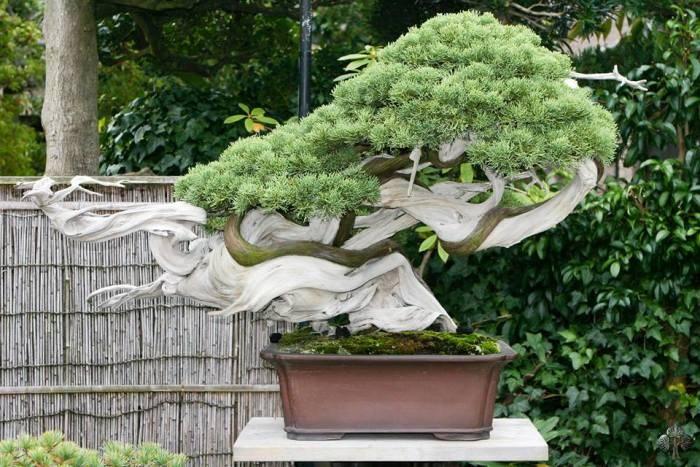 curso creacion y culrivo de bonsai