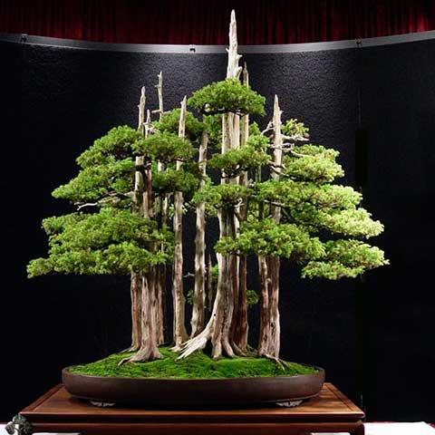 Curso de creacion y cultivo de bonsai 00 bourguignonshop - Cultivo de bonsai ...