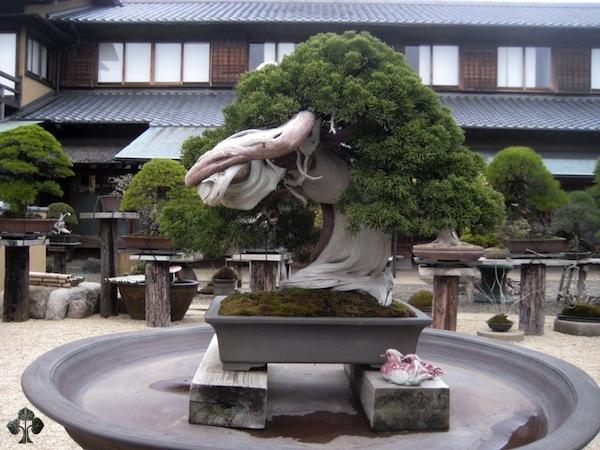 curso de creacion y cultivo de bonsai