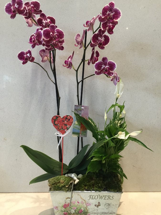 centro-orquideas