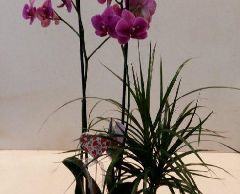 Orquídeas en San Valentín