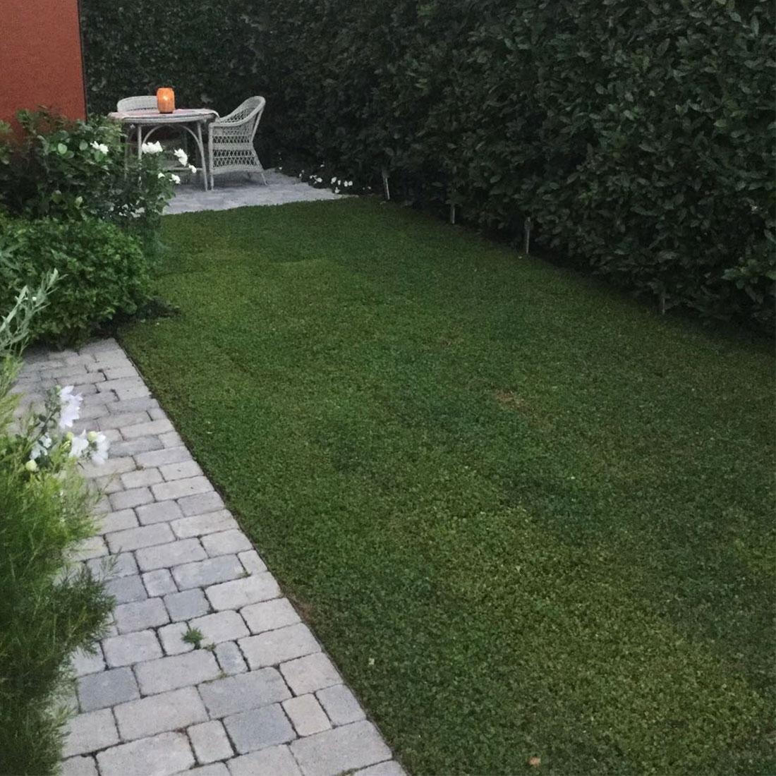 Colocación de Dichondra repens en tepes en un pequeño jardín en Madrid.