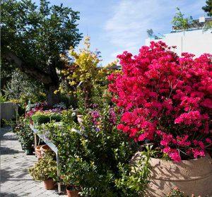 centro de jardinería bourguignon