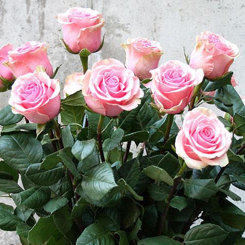 Ramo De Rosas Rosas Garden Center Bourguignon