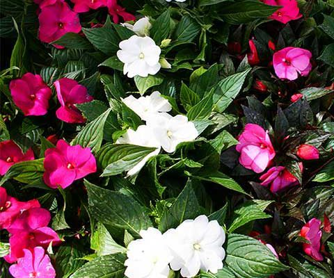 primeras plantas de verano