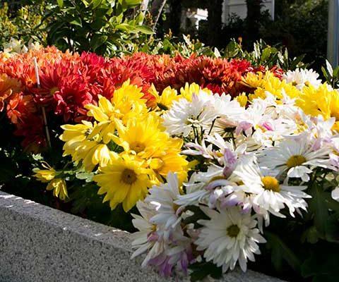Llega la primavera a nuestros jardines y terrazas