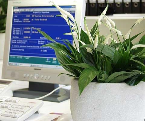 Los beneficios de las plantas en el hogar y en la oficina en otoño e invierno