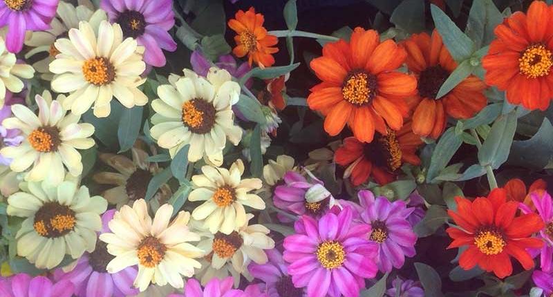bourguignon planta mes septiembre