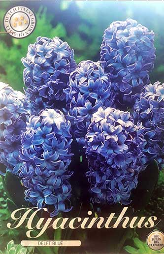jacintos delft blue