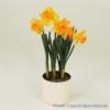 Bulbos de Otoño Invierno - Narciso Ducht Master
