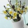 Bulbos de Otoño Invierno - Narciso Ice Follies