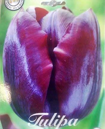 Bulbos de Otoño Invierno - Tulipan Black Jack