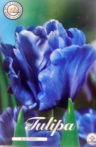 Bulbos de Otoño Invierno - Tulipan Blue Parrot