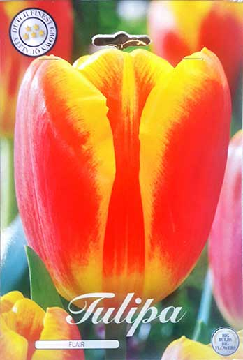 Bulbos de Otoño Invierno - Tulipan Flair