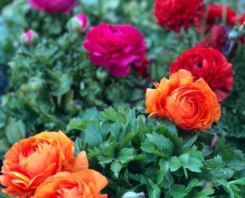 Garden Center Bourguignon