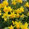 Narciso Tête à tête
