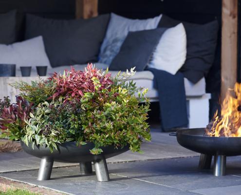 plantas de invierno en Garden Center Bourguignon