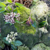 Viburnum tinus bola o durillo