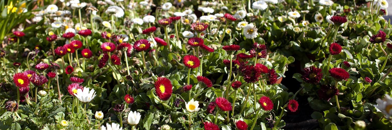 garden center bourguignon venta online