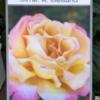 rosales repetitivos y perfumados