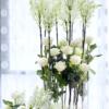 rosal blanca ferrer