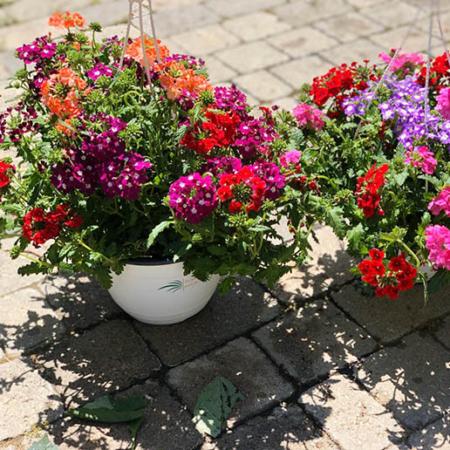 Composiciones de flores de primavera variadas colgantes