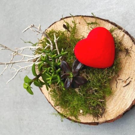 Jardines en miniatura de crasas sobre corcho