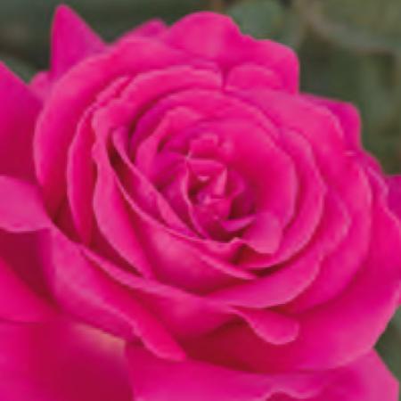 rosal velasquez