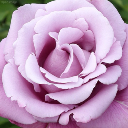 rosal charles de gaulle