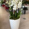 Gran centro de orquídeas